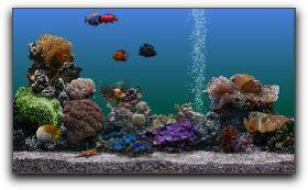j ai toujours voulu avoir un aquarium. Black Bedroom Furniture Sets. Home Design Ideas