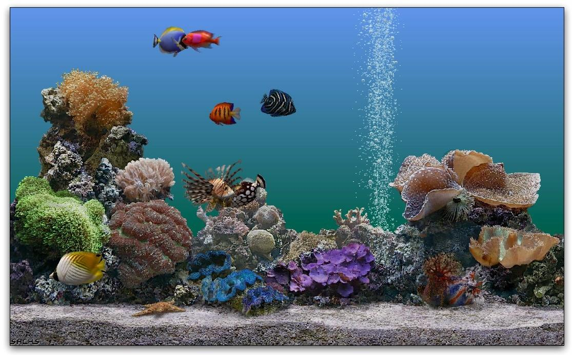Desktop background fond d 39 cran gratuit aquarium qui bouge for Fond ecran gratuit aquarium