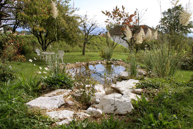 Mon tang naturel de jardin moi for Etang jardin