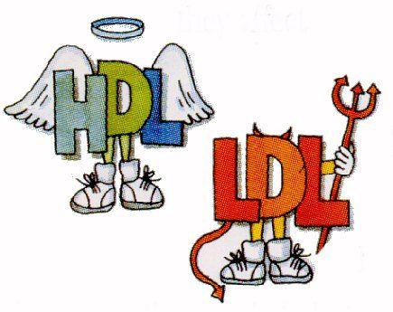 HDL vs. LDL